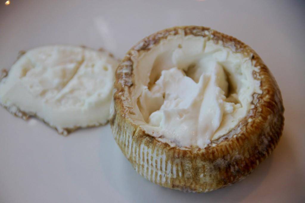 queso-cultivo - 1